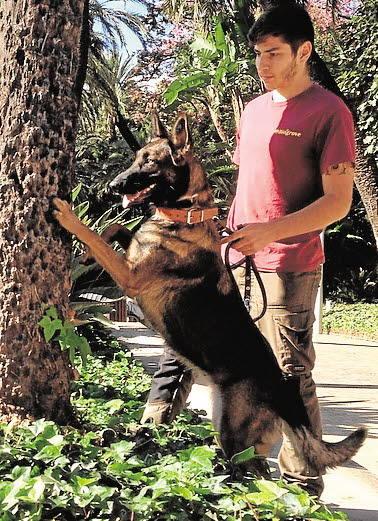 Dos heridos tras atacarles un perro que estaba siendo azuzado por su dueño al grito de «ataca, muérdeles» en Valencia