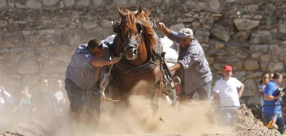 Amenazan a un activista y a una turista en el Concurso de Tiro y Arrastre de Valencia