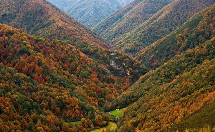 Fotos de los mejores bosques de España