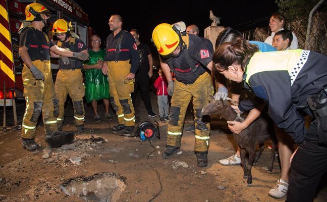 Los bomberos rescatan a una cabra atascada en un desagüe en Mutxamel