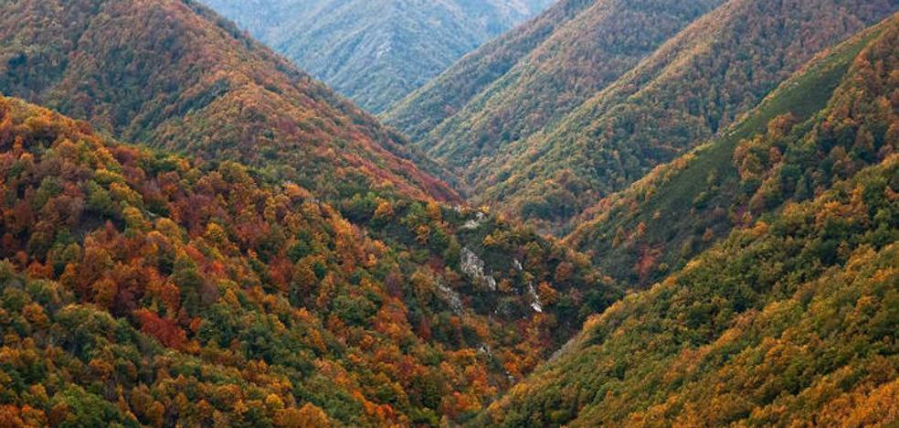Los mejores bosques de España para visitar este otoño