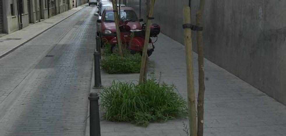 El Ayuntamiento de Valencia quiere que los vecinos adopten y cuiden los alcorques de la ciudad