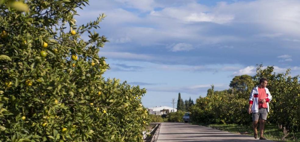 El descenso de producción de naranja hace subir los precios por primera vez en seis años