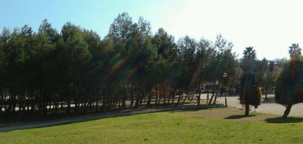 Tratamiento en los árboles de l'Alquenència