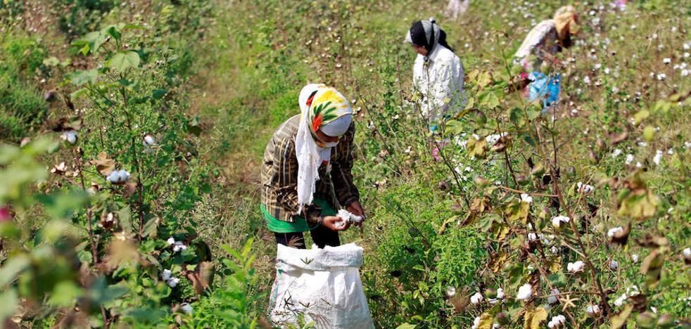 Al menos 30 muertos en India tras la inhalación de un químico tóxico en los campos de cultivo