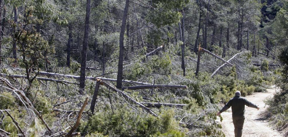 Retiran vigilancia en los montes de la Comunitat Valenciana pese al riesgo de incendios por la sequía
