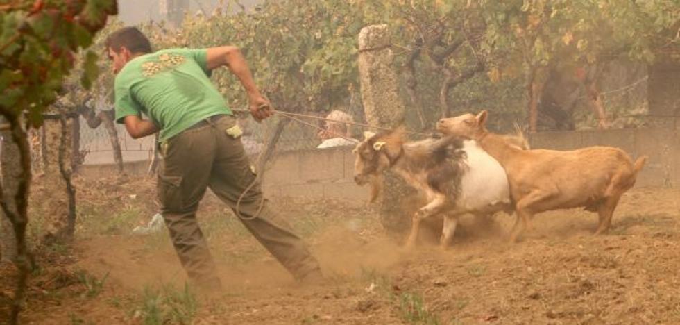 Las imágenes más dramáticas de los incendios en Galicia