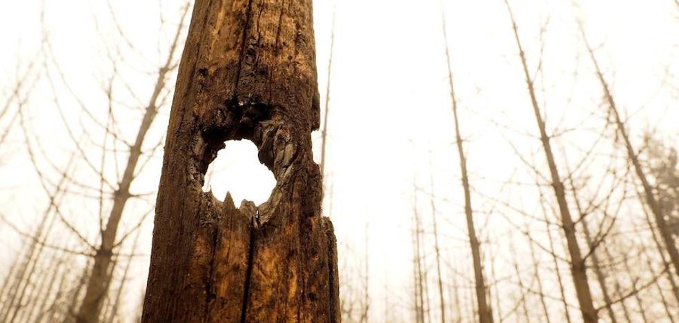 Tras el fuego, la desolación