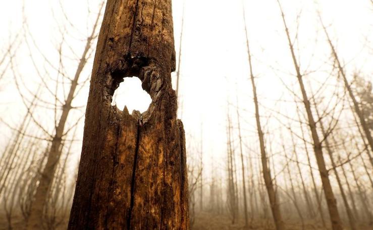 Fotos de la desolación tras el fuego en Galicia