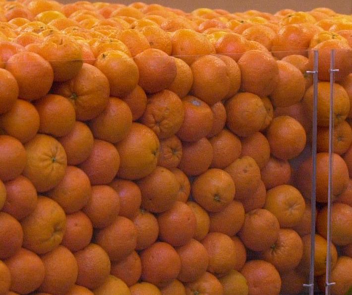 Correos inicia una campaña para el envío de naranjas y mandarinas valencianas