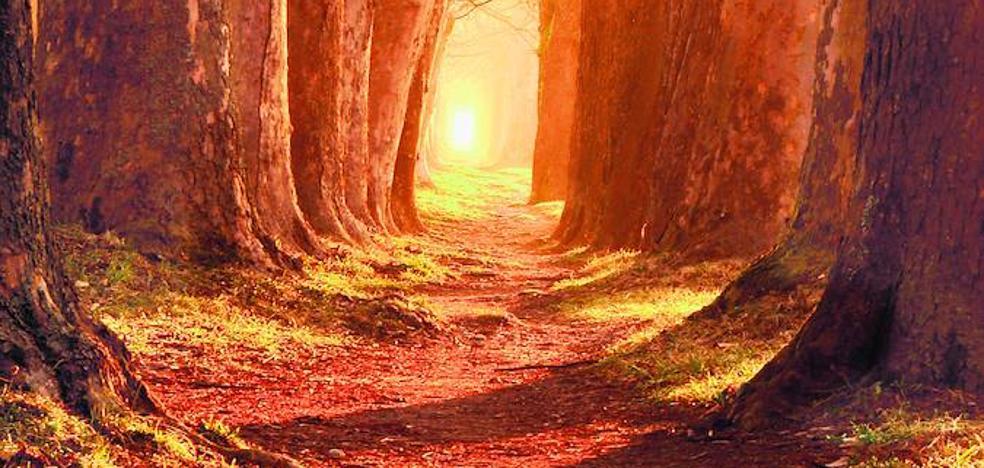 Un bosque devaluado