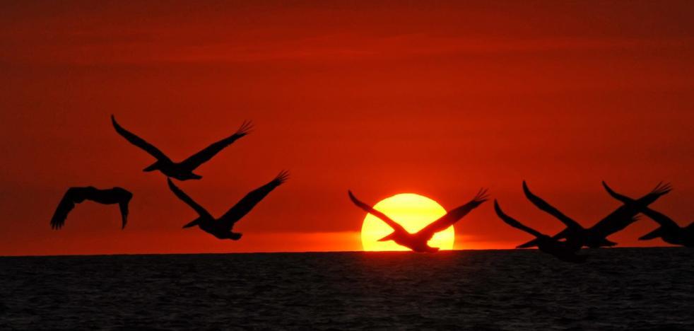 El cambio climático enloquece a las aves