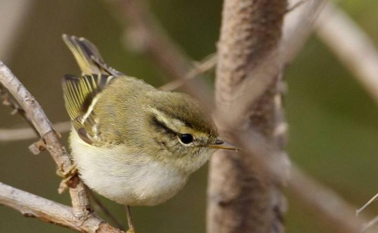 Fotos de las especies de aves afectadas por el cambio climático