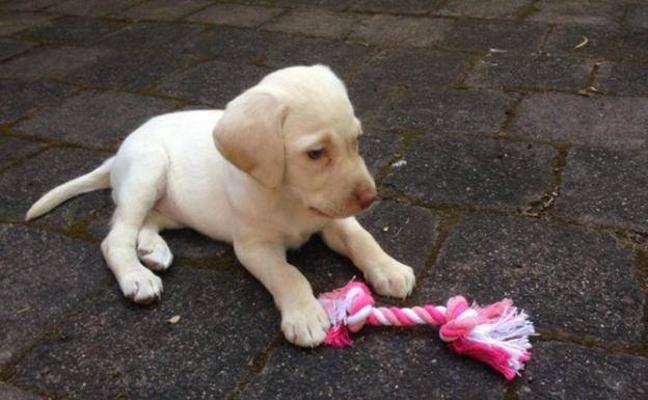 Unos ladrones devuelven un cachorro robado a una niña de 4 años por compasión