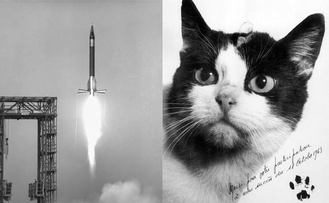Félicette, la gata europea que viajó al espacio