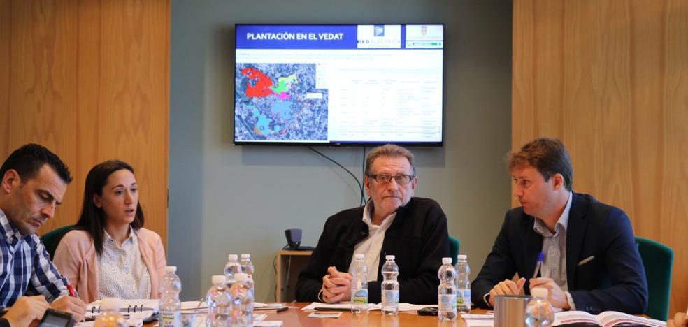 Torrent reforestará El Vedat con 400 nuevos áboles y talará 80 pinos