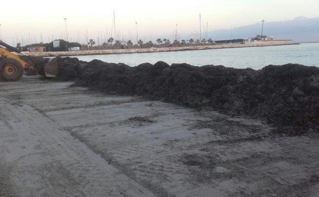 Dénia levanta barreras de posidonia en las playas para frenar la erosión