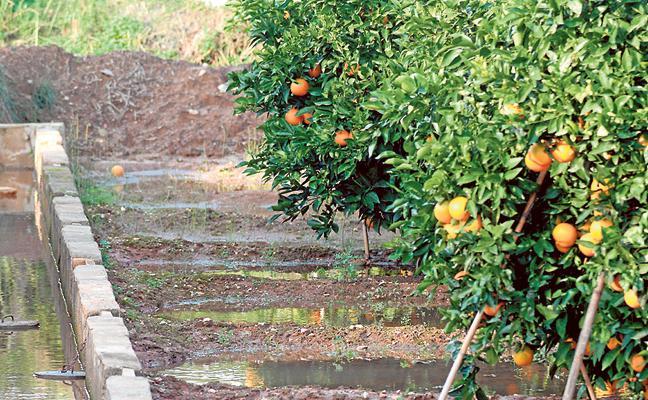Cada agricultor produce comida para 155 personas