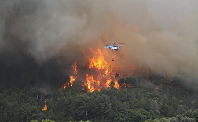 Recuperan la zona arrasada por el fuego en Pego con 4.000 carrascas