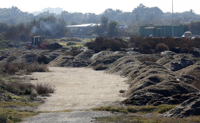 Costas reutiliza las algas retiradas de las playas para afianzar dunas en El Saler