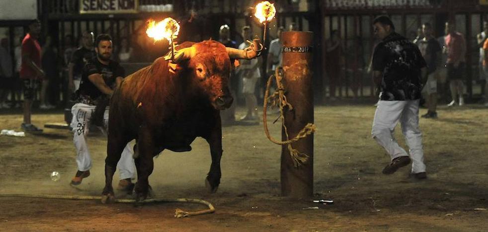 El arte de embolar toros en la calle