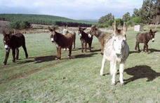 Excursiones en familia: Carrícola, burros y naturaleza