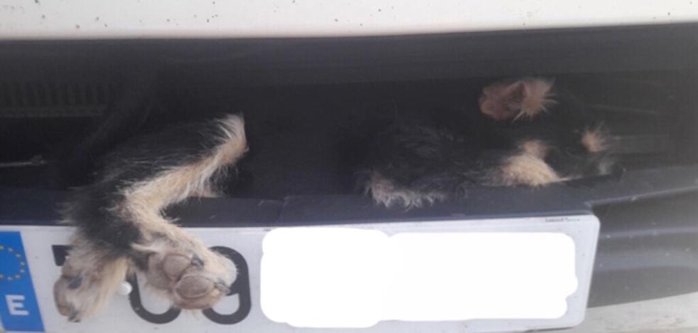 Los bomberos excarcelan con vida a un perro atropellado en Castellón