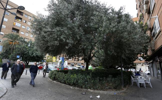 Multado en Cruz Cubierta por amor al aceite de oliva