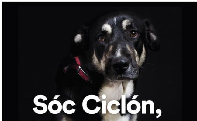 Los perros del refugio de Valencia buscan familia