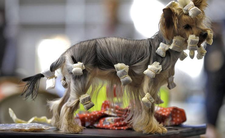 Fotos de la exposición Nacional e Internacional canina en Feria Valencia