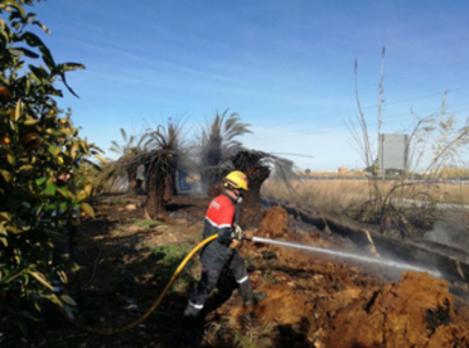 Un incendio quema 500 metros cuadrados en un huerto con palmeras de El Verger