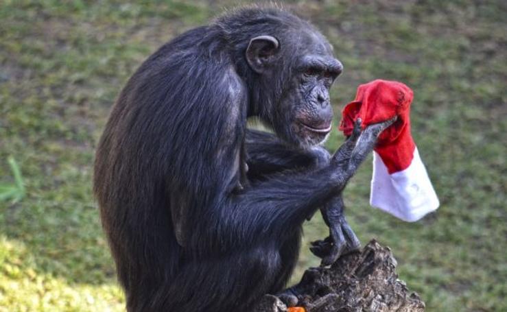 Fotos de los animales del Bioparc con sus regalos