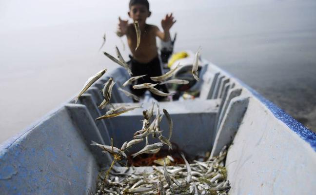 Los niños que comen pescado todas las semanas tienen más cociente intelectual