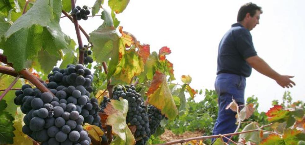 El Gobierno limita a 172,2 hectáreas el incremento de superficie de viñedo para cava