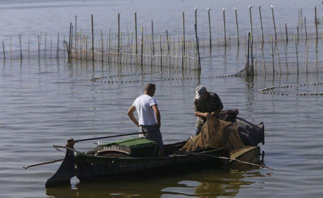 Pescadores de El Palmar impulsan la cría de lubinas para soltarlas en la Albufera