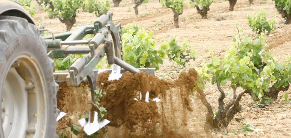 El Gobierno aceptará todas las solicitudes de plantación de viñedo para cava presentadas antes del viernes 29