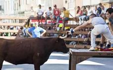El PP denuncia que el Consell «está haciendo lo imposible por cargarse los bous al carrer»