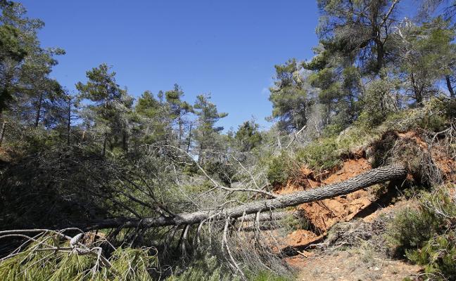 Medio Ambiente deja sin ayudas a la mayoría del monte valenciano