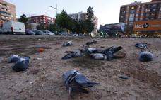 Decenas de palomas aparecen muertas en el barrio de Malilla