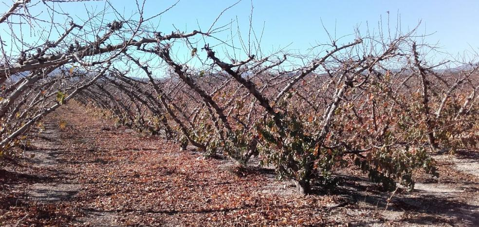 Turís pide la exención del IBI de rústica para compensar al sector agrario por la sequía