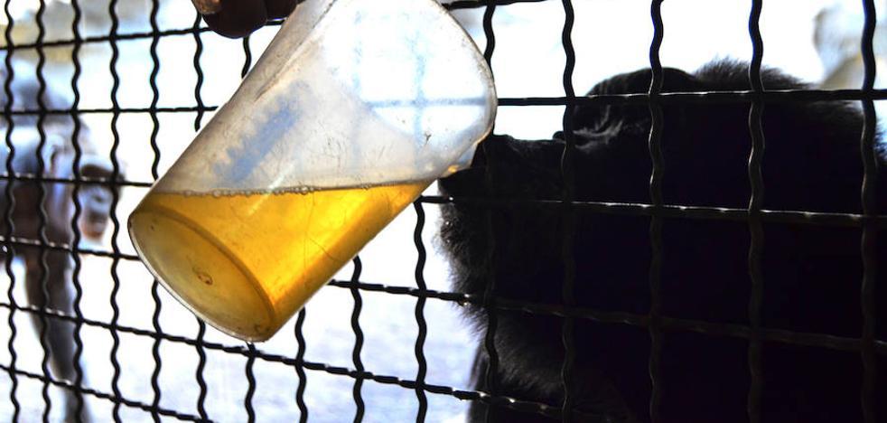 Sopa caliente y radiadores contra el frío para los animales del Bioparc