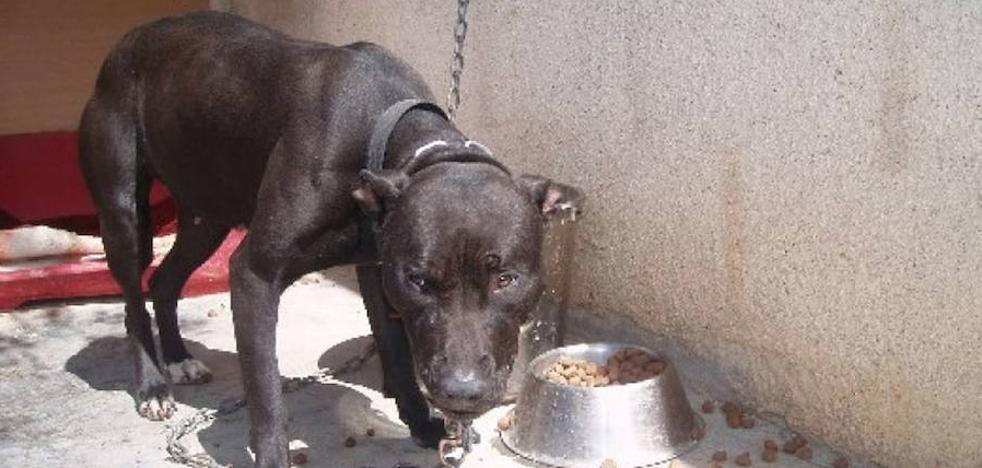 Un perro de raza peligrosa mata a bocados a un caniche en una calle de Valencia