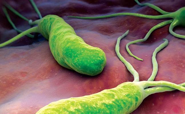 Helicobacter pylori, la peligrosa bacteria estomacal que tiene el 54% de la población