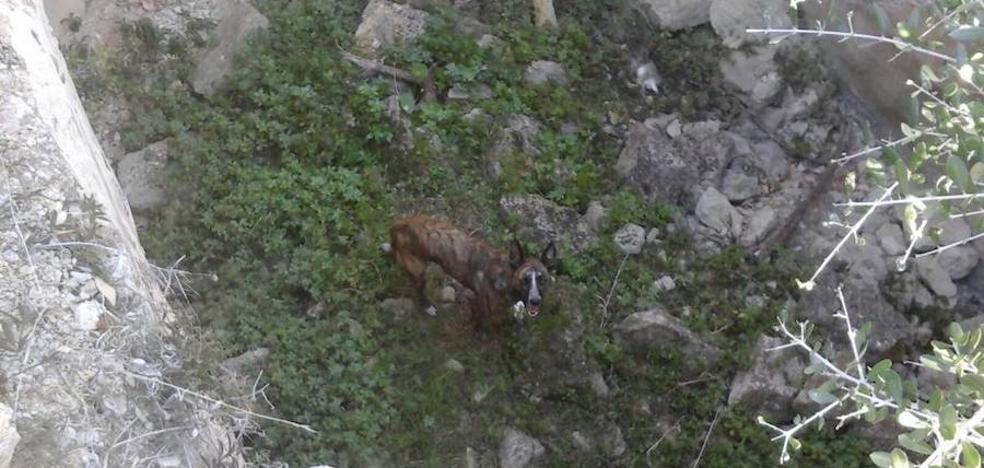 Los bomberos rescatan ileso en el Montgó a un perro que había caído en un aljibe abandonado de cinco metros