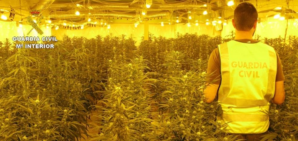 Cinco detenidos por cultivar 12.000 plantas de marihuana en Chiva