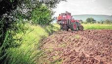 Biopenyagolosa pone en valor la calidad de la trufa de Vistabella