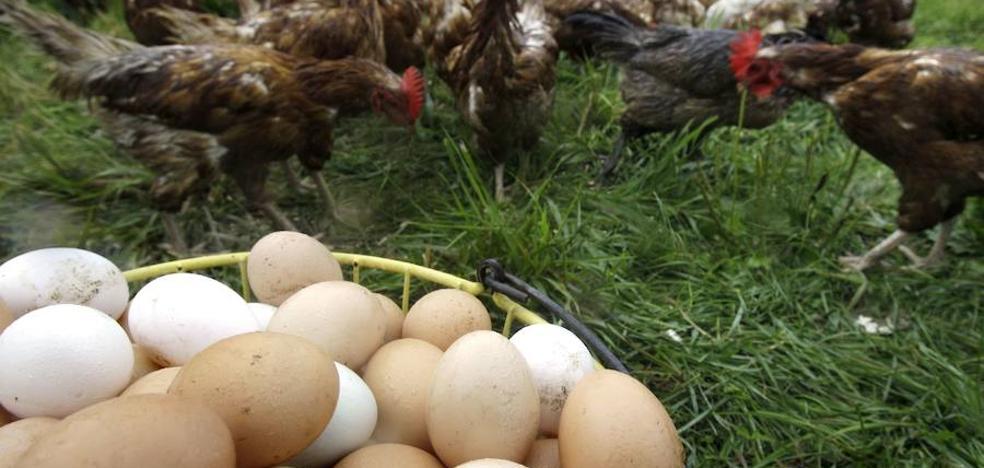 Huevos camperos: qué son y por qué aumenta su demanda