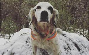 Un perro muere al proteger a sus dueños del ataque de un oso