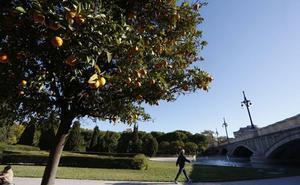 El Ayuntamiento aboga por reducir el césped tras la retirada de setos