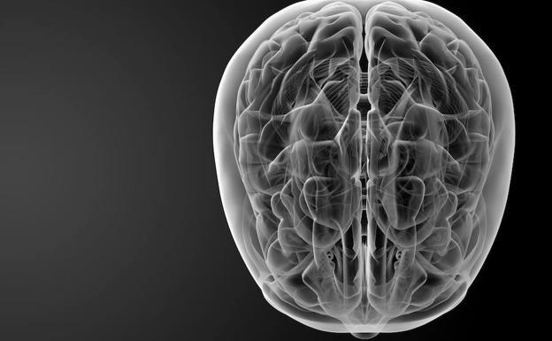 Modelo de un cerebro./